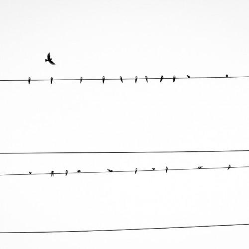 Auto reclose bird strike